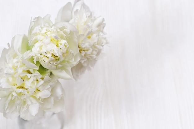 Bloesem witte pioenroos bloemen close-up op licht hout