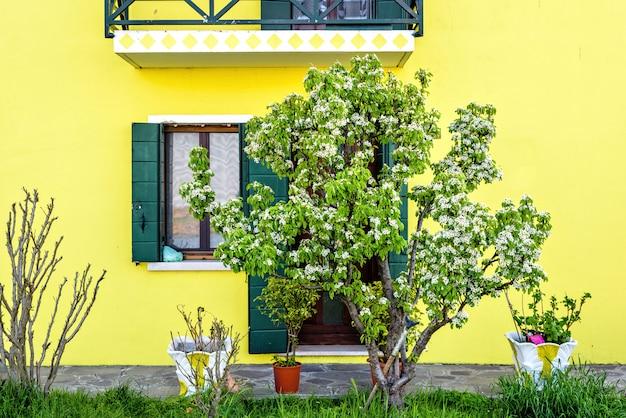 Bloesemboom en het heldere gele gebouw in venetië
