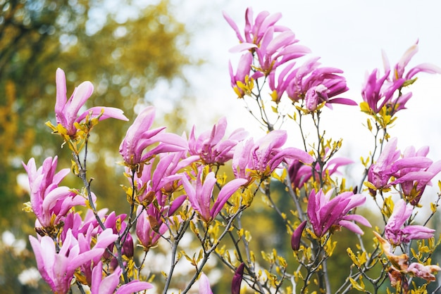 Bloesemboom met tak met roze bloemen