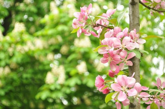 Bloesems van de lente