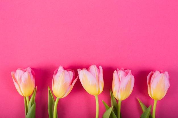 Bloesems van tulpen in lijn