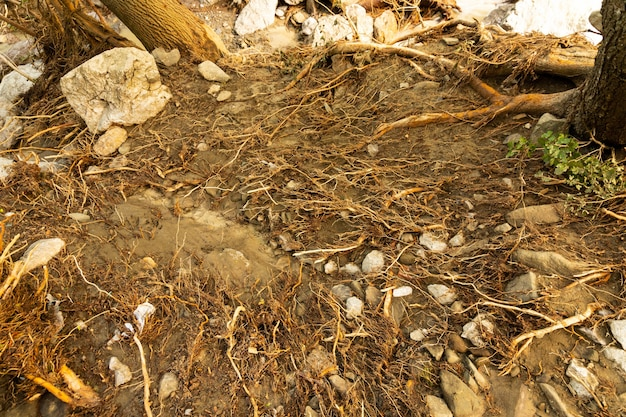 Blootliggende boomwortels na recente overstromingen hebben kusterosie veroorzaakt.