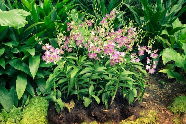 Blossom orchideebloemen onder groene planten
