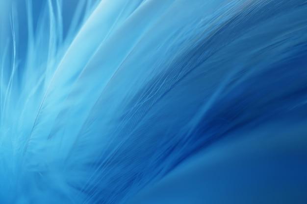 Blue bird-kippenveer voor achtergrond