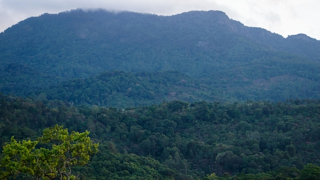Blue rocky western ghats peak in tamil nadu