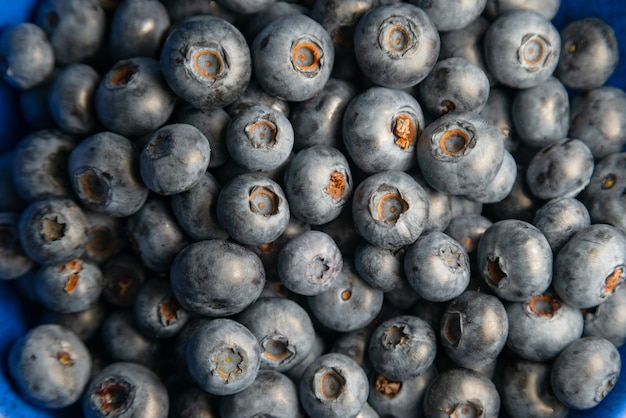 Blueberry achtergrond. rijpe bosbessen close-up. biologische en gezonde voeding.