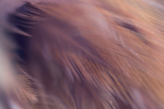 Blur bird kippen veer textuur voor achtergrond