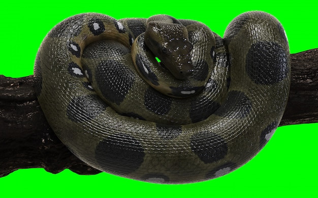 Boa constrictor groene anaconda met uitknippad.