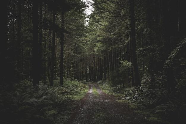 Bochtige smalle modderige weg in een donker bos omgeven door groen en een beetje licht van bovenaf