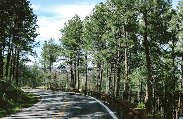 Bochtige weg in het midden van het bos op een zonnige dag