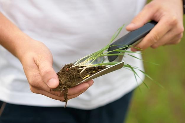 Bodem en plantenspruiten op het schouderblad