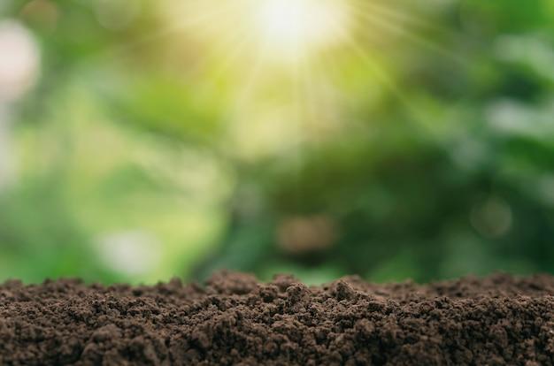 Bodem voor planten met groene vervaging en zonlicht achtergrond