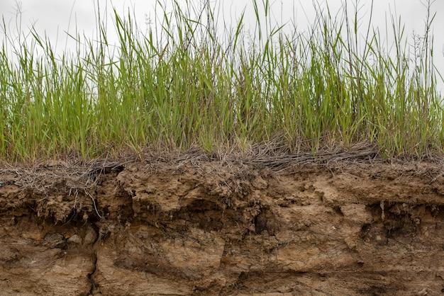 Bodemsnede als gevolg van aardverschuiving. natuurlijke bodemsnede met verschillende lagen