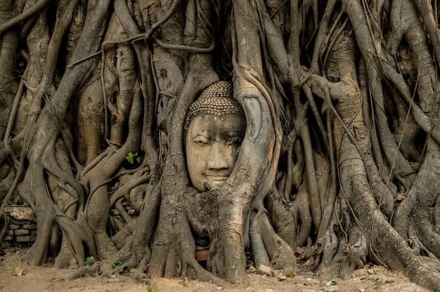 Boeddha hoofd geroot.