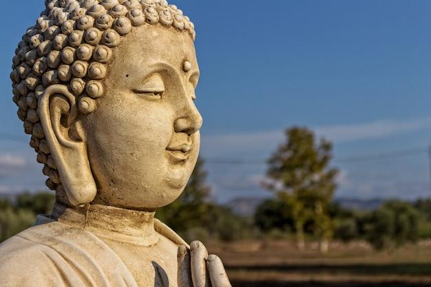 Boeddha landschap