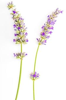 Boeket bloemen en lavendelzaden