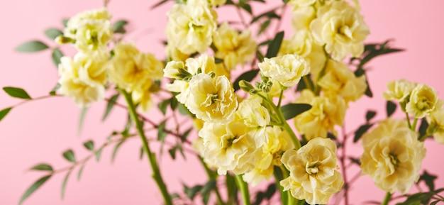 Boeket gele matthiola met takken van groene bladeren op roze achtergrond