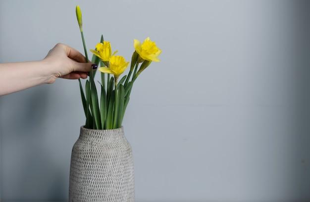 Boeket gele narcissenbloemen in een vaas die op grijs wordt geïsoleerd