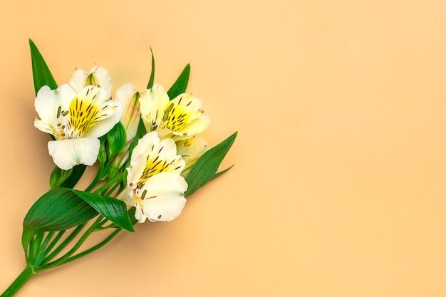 Boeket van alstroemeria bloemen geïsoleerd op beige