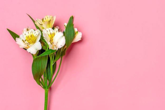 Boeket van alstroemeria bloemen geïsoleerd op roze. bovenaanzicht