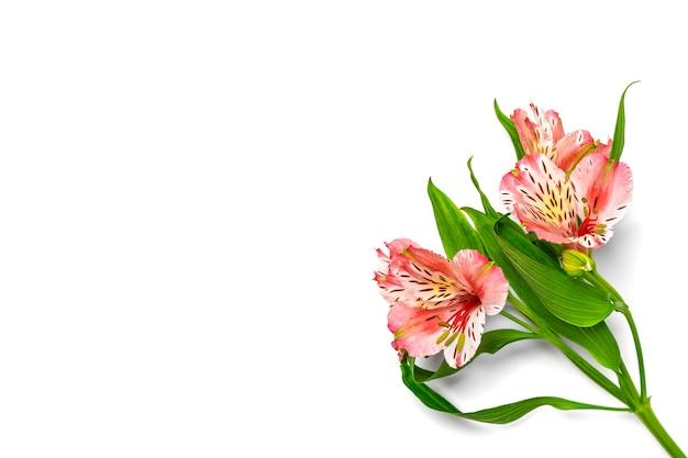 Boeket van alstroemeria bloemen geïsoleerd op wit