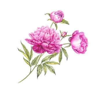 Boeket van aquarel roze pioenrozen.