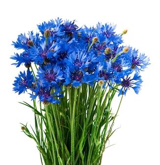 Boeket van blauwe korenbloemen geïsoleerd op een witte achtergrond