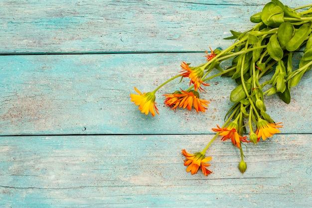 Boeket van bloeiende calendula. gezond ingrediënt voor thee, alternatieve geneeskunde