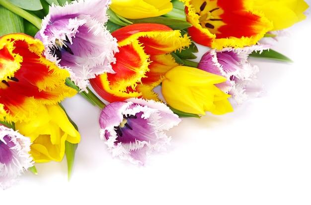 Boeket van de tulpen op witte achtergrond