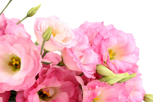 Boeket van eustoma bloemen, geïsoleerd op wit