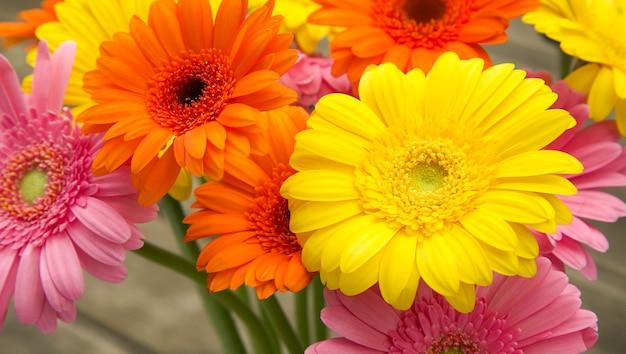 Boeket van geeloranje roze gerbera's in de tuin kleurrijke lentebloemen selectieve aandacht