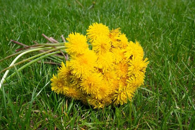 Boeket van gele paardebloemen op groen gras in de zon. zomer concept