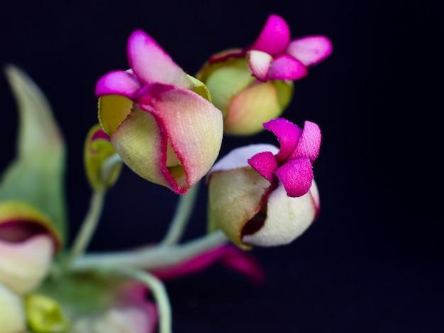 Boeket van gele rozen met rode bloemen met knoppen geïsoleerd op zwarte achtergrond