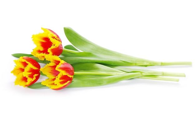 Boeket van gele tulpen geïsoleerd op white