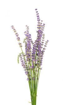 Boeket van lavendel geïsoleerd