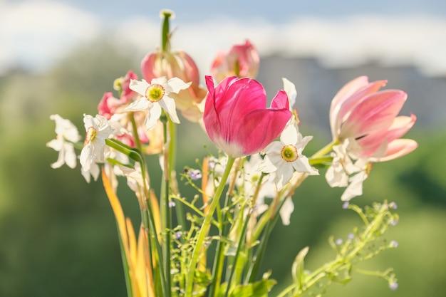 Boeket van lente bloemen tulpen en witte narcissen