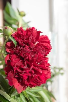 Boeket van mauve pioenrozen op een tuin table.flower arrangement. boeket van rode pioenrozen, lat. paeonia lactiflora in vaas op witte achtergrond. kopieer ruimte Premium Foto
