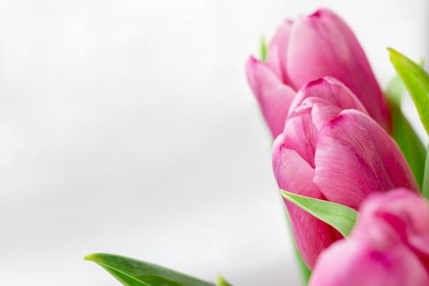 Boeket van mooie roze tulpen tegen een witte grijze onscherpe achtergrond met kopie ruimte. fijne lentebloemen als cadeau voor de vakantie. selectieve aandacht