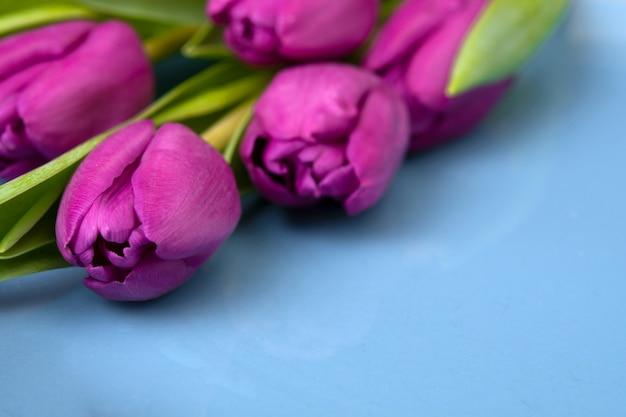Boeket van paarse tulpen op een blauwe muur