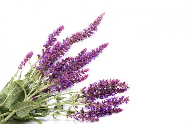 Boeket van purpere wilde bloemen op een witte achtergrond, de conceptie van geneeskrachtige installaties
