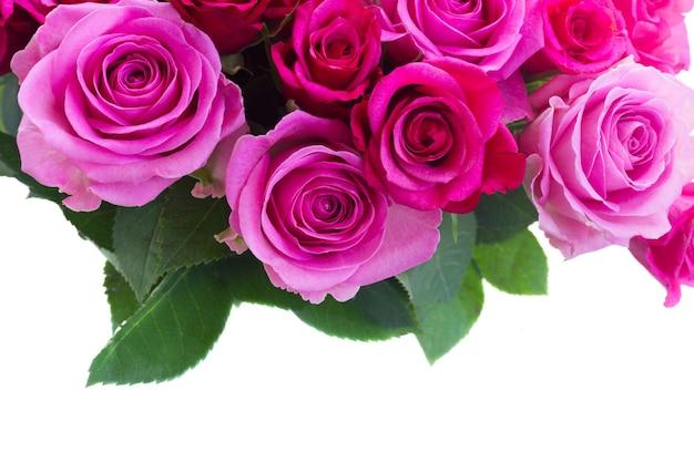 Boeket van roze en magenta rozen met de grens van de bladerenclose-up op witte achtergrond wordt geïsoleerd die