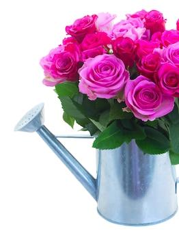 Boeket van roze en magenta verse rozen in gieter close-up geïsoleerd op een witte achtergrond