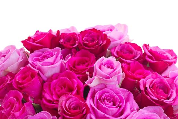 Boeket van roze en magenta verse rozengrens die op witte achtergrond wordt geïsoleerd
