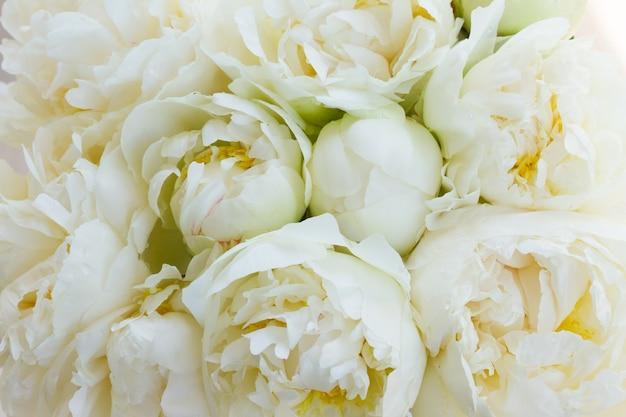 Boeket van verse witte pioenroos bloemen bakcground