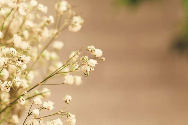 Boeket van witte gipskruid, baby's adem bloemen close-up