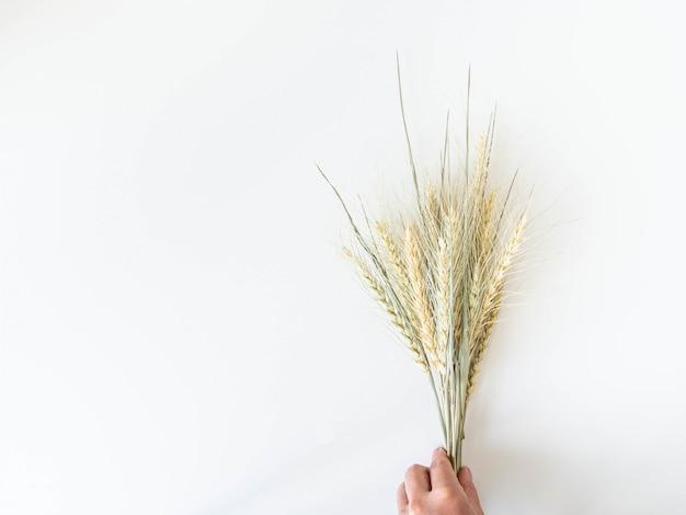 Boeketoren van tarwe van een lichtgroene pastelkleur op een witte achtergrond. bovenaanzicht. kopieer ruimte