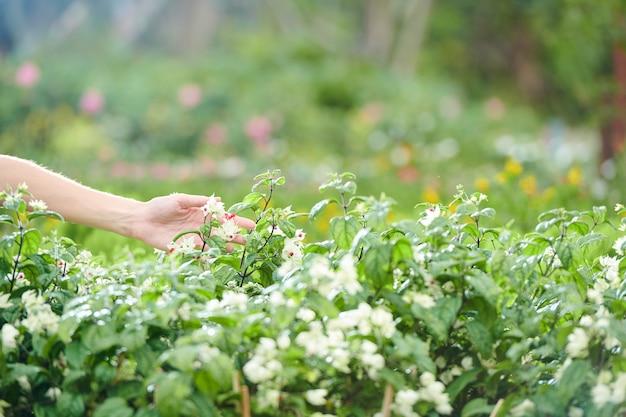 Boer aanraken van bloemen