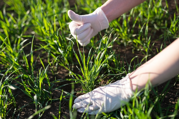 Boer agronoom die de kwaliteit van gewassen in het veld controleert
