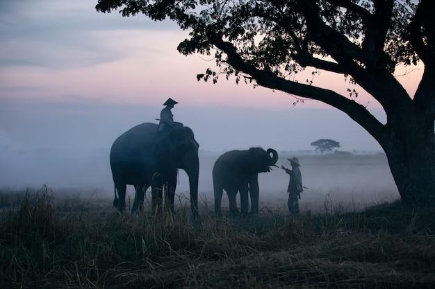 Boer en olifanten op rijst veld oogst doen