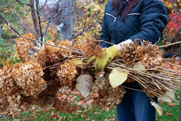 Boer houdt gekapte takken, boomtakken en droog gras vast na het schoonmaken in de tuin op een warme herfstdag